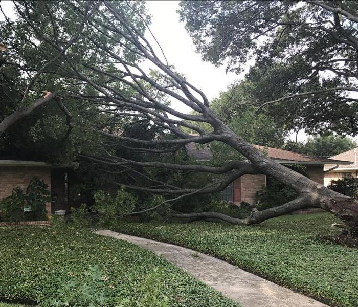 Storm Causes Tree to Break, Fall on Dallas, Home Before