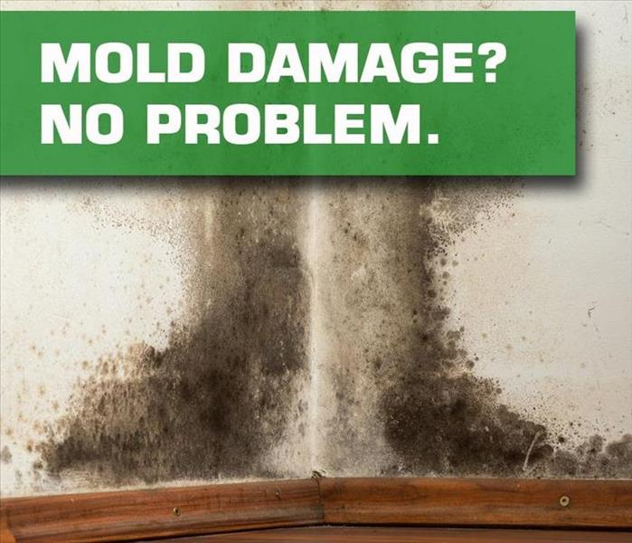 Mold Remediation Mold Remediation Dallas
