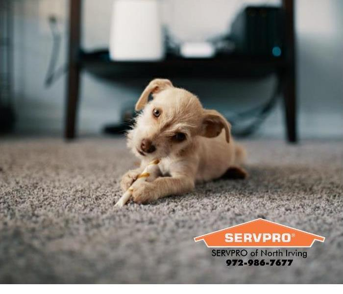 Cleaning Tips on How to Keep Your Carpet Clean If You Have Pets