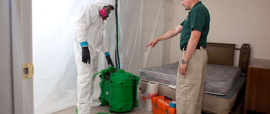 Irving, TX mold removal process